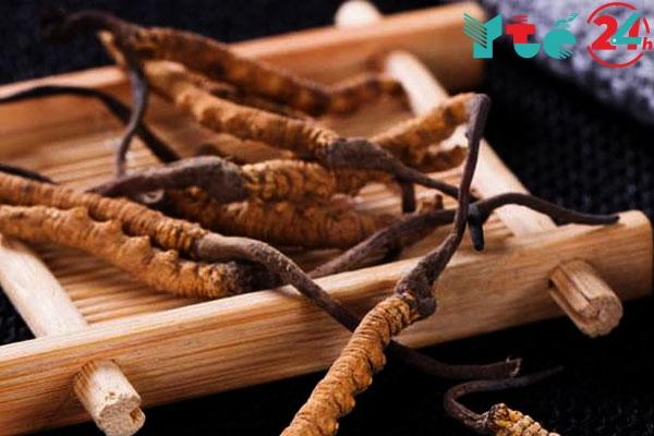 Đông trùng hạ thạo là một cây thuốc quý được chiết xuất để tạo nên Đế Vương Đơn
