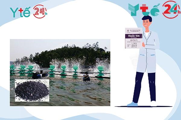 Thuốc tím khử trùng cho cá