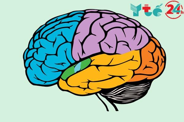 Thuốc Citicoline điều trị bệnh về hệ thần kinh