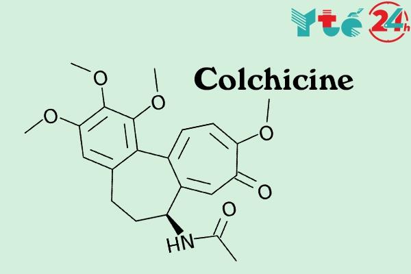 Colchicine là thành phần chính của Cocilone với hàm lượng 1mg