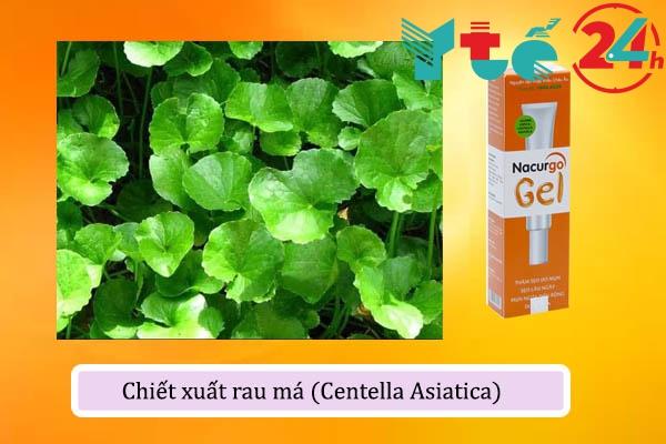 Chiết xuất rau má (Centella Asiatica) trong Nacurgo Gel