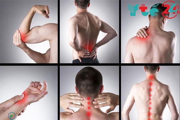 Thông đất chữa đau nhức xương khớp, phong thấp