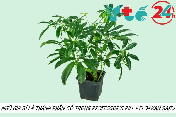 Thành phần của Professor's Pill Keluaran Baru