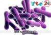 Tìm hiểu về bệnh bạch hầu