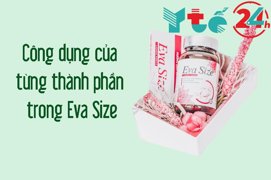Công dụng từng thành phần của Eva Size