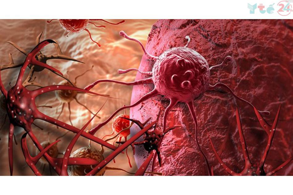 Fucoidan kích thích tế bào ung thư tự tiêu diệt theo chu trình chết tự nhiên của tế bào.