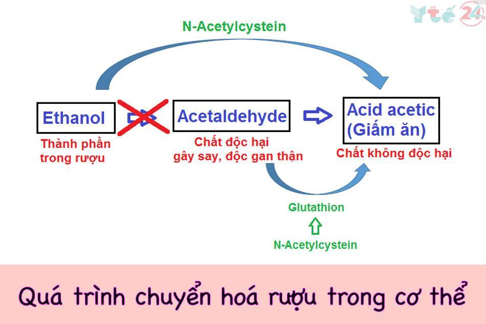 Quá trình chuyển hóa của rượu